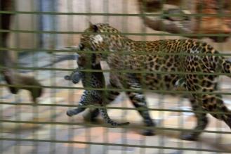 Tierpark_09