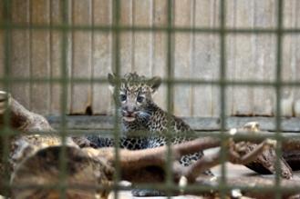Tierpark_10