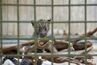 Tierpark_11